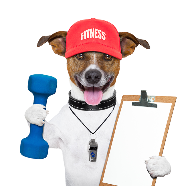 Leading Paws | Fitness Dog