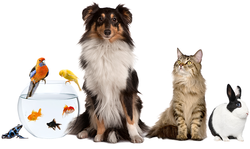 Leading Paws | Pet Sitting